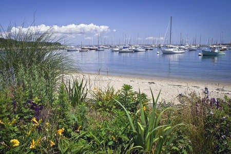 A garden view of a marina on Martha s Vineyard on a nice Summer day