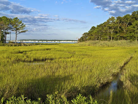 lowlands: A wide view of wetlands near Ocean City in Maryland.
