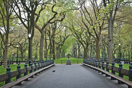 An early Spring view of rows of sycamore tress along The Mall area of Central Park.
