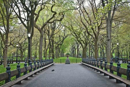 Ein früher Frühling Blick auf Reihen von Bergahorn Bäume entlang der Mall-Bereich des Central Parks.