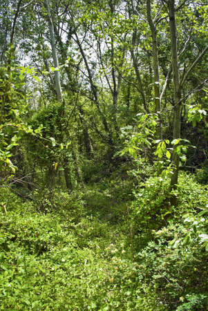 A dense green woods near Snake Hill in Secaucus, New Jersey. Stock Photo - 13659836
