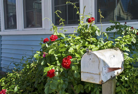 A rural mailbox outside a home in a Summer garden. Stock Photo