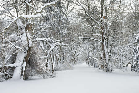 freshly fallen snow: Neve appena caduta su un sentiero attraverso i boschi dell'Europa centrale New Jersey.