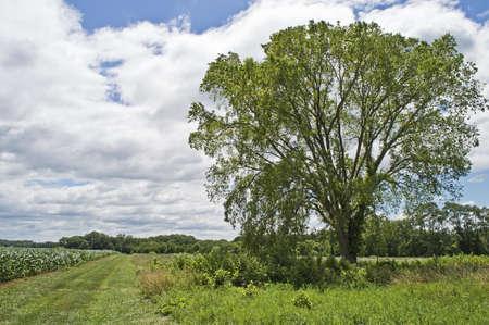 옥수수 밭 및 저명한 나무와 농촌 뉴저지의 시골보기.