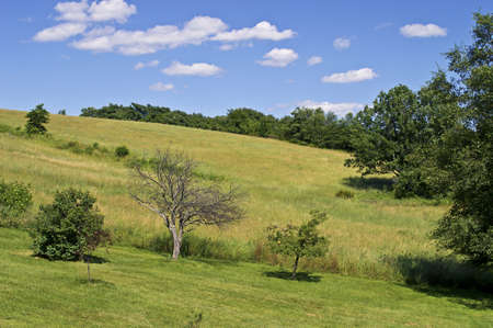 Summer Hillside.A Summer view of a hillside in Sussex County, New Jersey.
