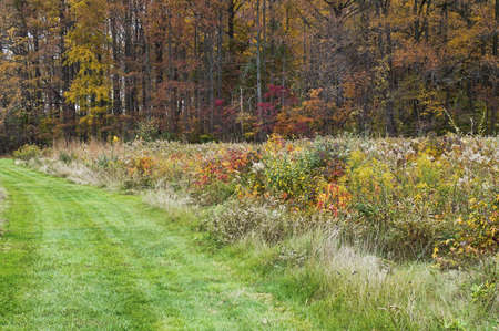 middlesex: Colorful Trail A grass path though a colorful Autumn meadow in Davison Mill Park in Middlesex County, New Jersey. Stock Photo