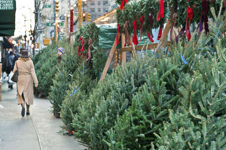 """coronas de navidad: """"Los árboles acera"""" árboles de Navidad para la venta a lo largo de la acera a lo largo de 2 ª Avenida. en Manhattan."""