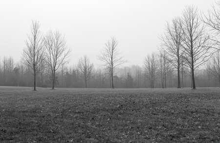 arboles blanco y negro: Un invierno en blanco y negro de los árboles desnudos de invierno en un campo en Manalapan Árboles, Nueva Jersey. Foto de archivo
