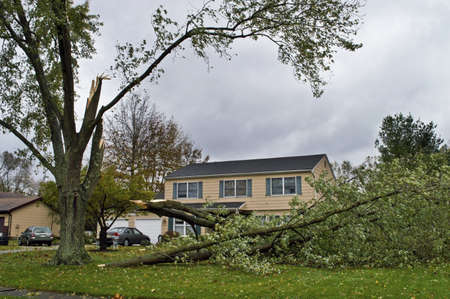 MANALAPAN, NEW JERSEYUSA – OCTOBER 30: A downed tree as a result of Huricaine Sandy on October 30 2012 in Manalapan, New Jersey.
