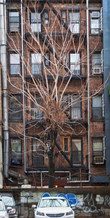 An interesting tree against an apartment building on the Westside of Manhattan.
