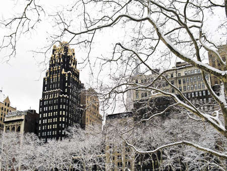 bryant park: Snow covered sycamore tree branches in Bryant Park in Manhattan.