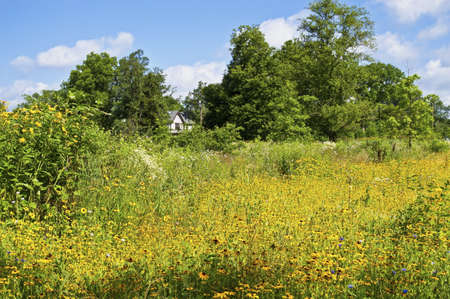 A wildflower meadow in Central New Jersey