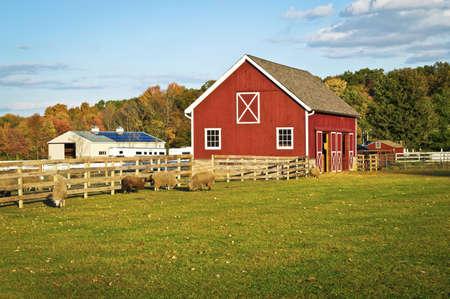 Eine rote Scheune und Nutztieren in dieser malerischen Herbst Blick in Central New Jersey.