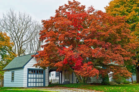 Beautiful Autumn foliage in the fron yard of this Clinton New Jersey home