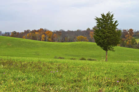 A single pine tree against a rolling green hill Autumn landscape in North West New Jersey  photo