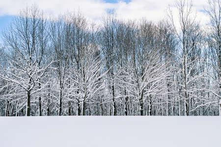 freshly fallen snow: Neve appena caduta rivestendo i rami in questo bosco Central New Jersey