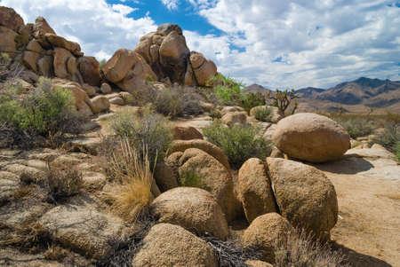 mojave: The Mojave Desert containing Joshua Tree National Park in Southern California