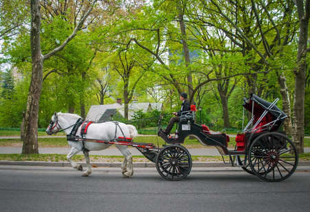 central park: NEW YORK - APRIL 18   A horse and buggy carriage with coachman in Central Park on April 18 2012 in New York City  The carriage rides are in danger of being banned for animal safety issues  Editorial