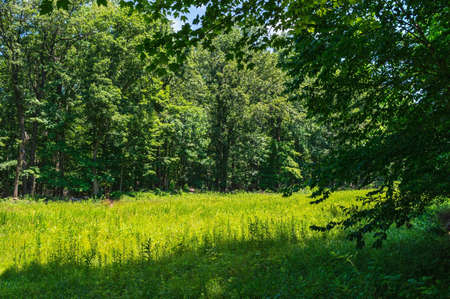 county somerset: Summer greens in this meadow at Sourland Mountain Preserve in Somerset County New Jersey  Stock Photo