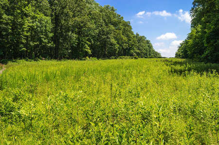 county somerset: A Summer field in Sourland Mountain Preserve in Somerset County in New Jersey  Stock Photo