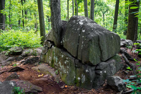 A tree growing through a rock formation in Sourland Mountain Preserve in Central New Jersey