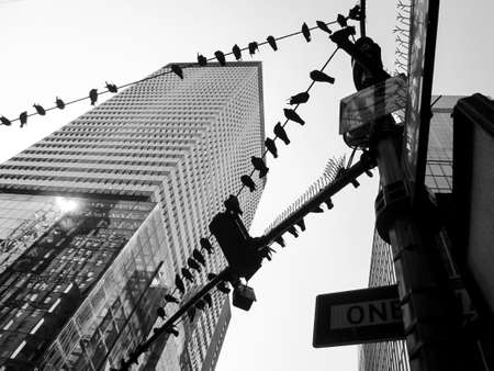 Lines of pigeons form an interesting composition on these powerlines in New York City  photo