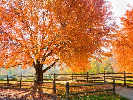 ニュージャージー州のベセル公園の見事な紅葉します。