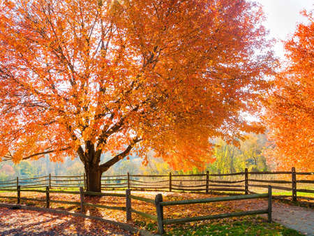 Spectacular Autumn colors in Holmdel Park in New Jersey  photo