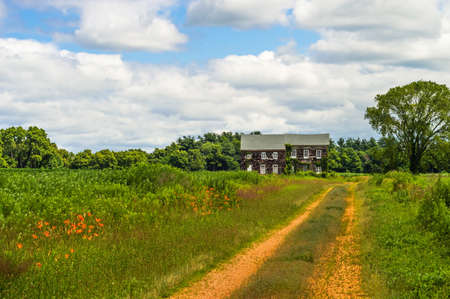 molly: Tiger lillies along the dirt road leading to the historic Molly Pitcher Home in Feeehold NJ  Stock Photo
