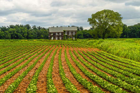 Rows of crops in front of the historic Molly Pitcher home in Freehold NJ  Stock Photo