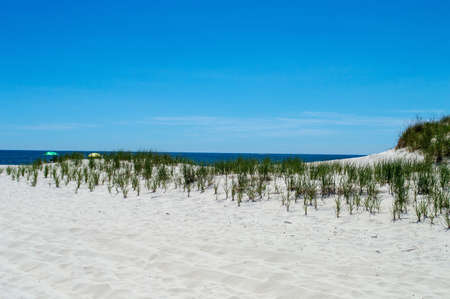 sawgrass: Sawgrass, sand dunes and wide beach in a unpopulated area of Long Beach Island along the New Jersey coastline