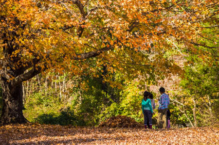 TITUSVILLE, NEW JERSEY-OCTOBER 12-Children enjoy the Autumn leaves in Washington Crossing State Park on Oct 12 2014 in Titusville New Jersey.