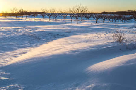 drifts: A Winter orchard with fresh snow and drifts in Freehold New Jersey. Stock Photo