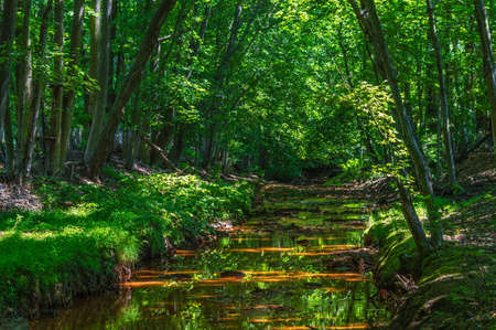 peers: Sunlight peers through the trees over this small stream in Manalapan, New Jersey.