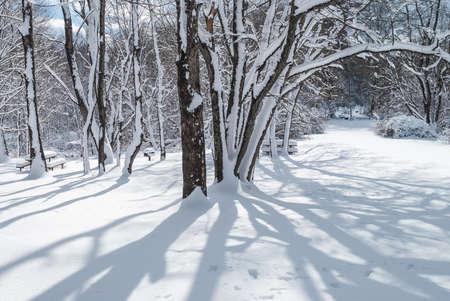 freshly fallen snow: Ombre degli alberi sulla neve appena caduta in questo parco nel centro di New Jersey. Archivio Fotografico