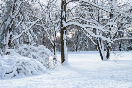 duotone: A blue tinted duo-tone of fresh snow in this Central New Jersey woodland. Stock Photo