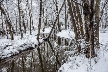 freshly fallen snow: Milford Brook in Manalapan New Jersey after freshly fallen snow. Stock Photo