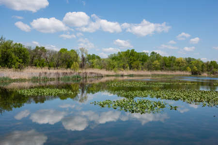 refuge: A wetland view on a nice Spring day at the John Heinz National Wildlife Refuge in Tinicum Pennsylvania.