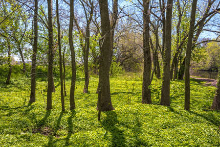township: Early Spring greenery in this woodland in Tinicum Township in Eastern Pennsylvania.