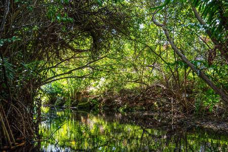 riviera maya: A cenotte in the jungle near Riviera Maya in Mexico.