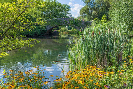 A Summer pondside garden in Central Park near the stone bridge. Stok Fotoğraf