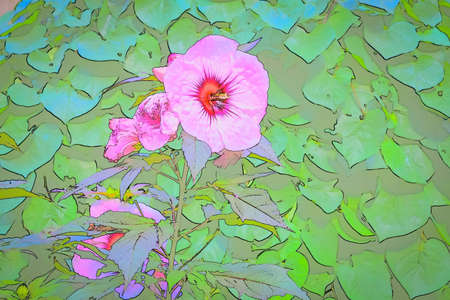 A colorful photo effect on a large pink hibiscus flower.