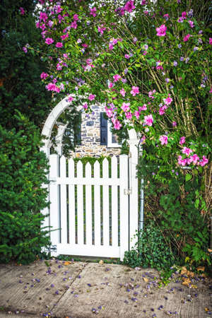 garden gate: A white picket arched gate surrounded by Summer flowers.