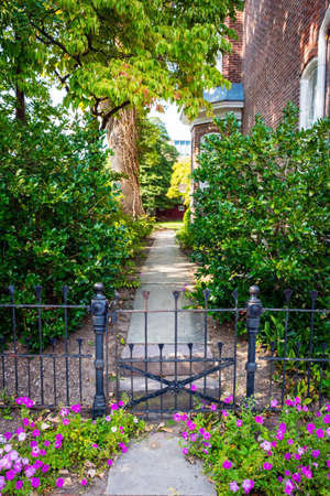 petunias: Purple petunias and an old iron gate in this entrance to a backyard in Central New Jersey.