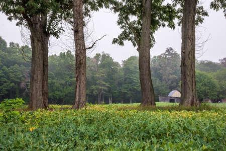 중앙 뉴저지 에서이 여름 풍경에 4 개의 저명한 나무.