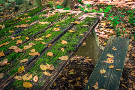 hojas antiguas: An old picnic table with green moss and fallen leaves.