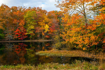 state park: Colorful Autumn reflections on this pond in Allaire State Park in New Jersey.