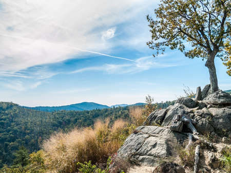 west virginia trees: A scenic view of Shenandoah National Park on an early Autumn day. Stock Photo