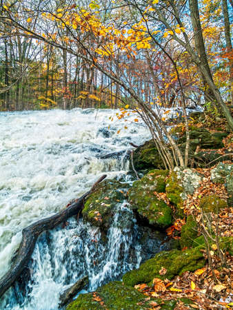 woodlands: A fast moving stream runs through this woodlands of the Pocono Mountains of Pennsylvania.