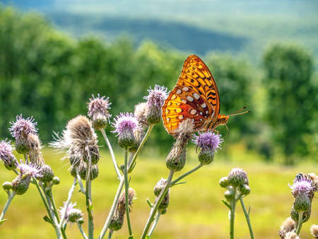 a meadow: A close-up of a butterfly in this Summer meadow in Northern New Jersey. Stock Photo
